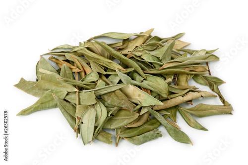 Fototapeta Myrtle herb isolated on white background obraz