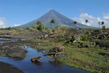 Mayon Volcano, Albay, Philippi...