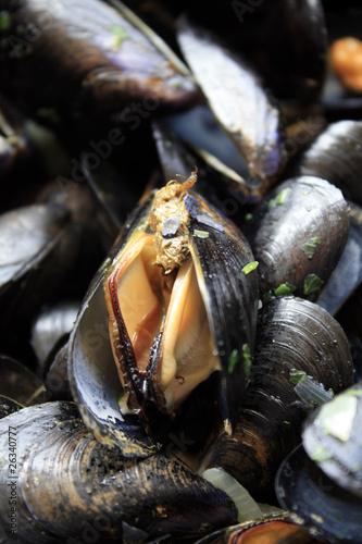 Fotomural moules marinières