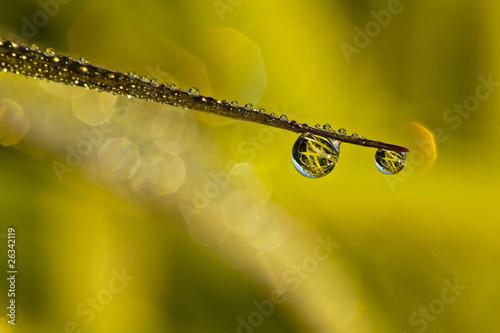 Poranna rosa na źdźble trawy