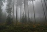 strzeliste drzewa we mgle