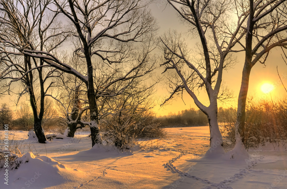Fototapety, obrazy: Beautiful winter sunset with trees in the snow
