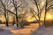 Beautiful Winter Sunset With Trees In The Snow