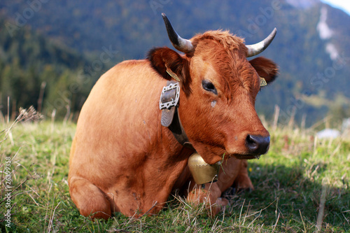 Poster de jardin Vache vache en montagne
