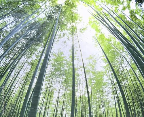 Bosque de bambu,Bambusoideae