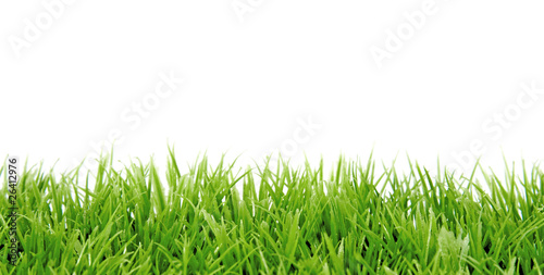 Grass in closeup over white background
