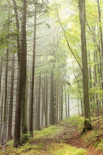 Foto auf Acrylglas Wald im Nebel Path in misty autumn forest