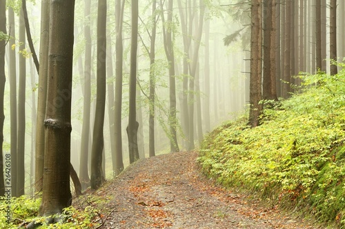 Foto auf Acrylglas Wald im Nebel Forest path among the deciduous and coniferous trees