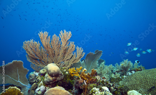 Staande foto Koraalriffen Coral reef seageat major fish
