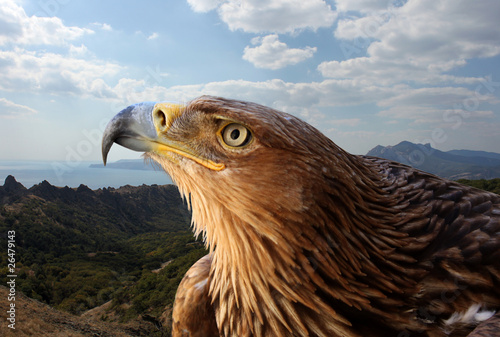 Poster Eagle golden eagle over mountanious landscape