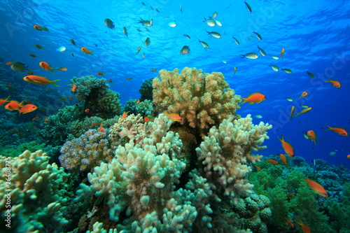 Fototapety, obrazy: Tropical Coral Reef and Fish