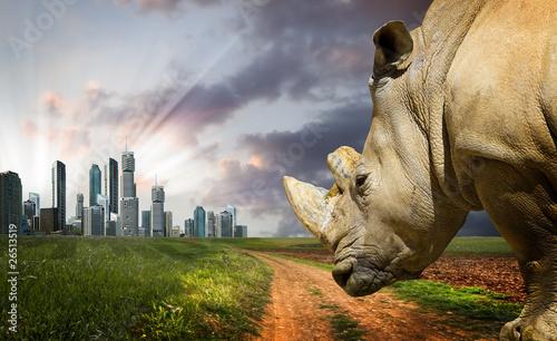 Spoed Foto op Canvas Neushoorn Powerful rhino at sunset. Nature against progress