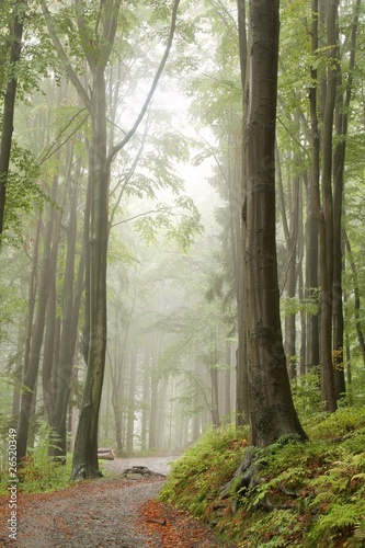 Papiers peints Foret brouillard Path in misty autumn forest