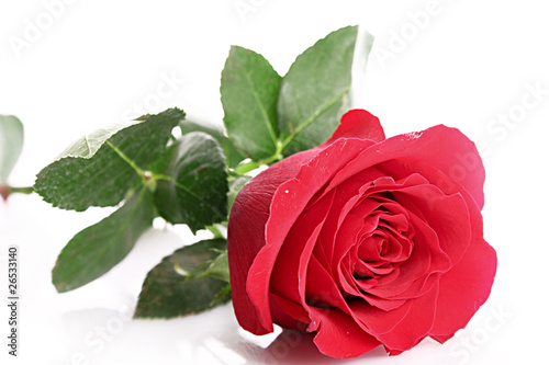 Red rose closeup isolated on white. © Africa Studio