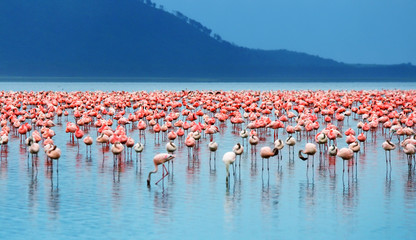 Panel Szklany Podświetlane Zwierzęta African flamingos