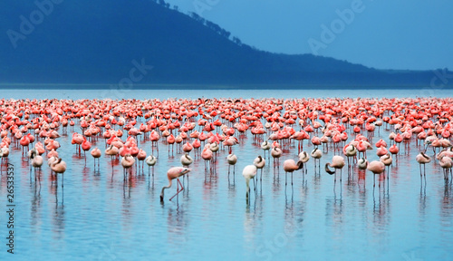 Photo sur Toile Flamingo African flamingos