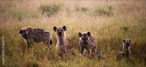 Poster Hyène Family of hyenas.
