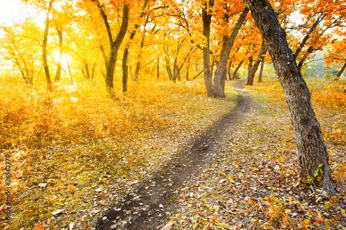 jesienny-poranek-park