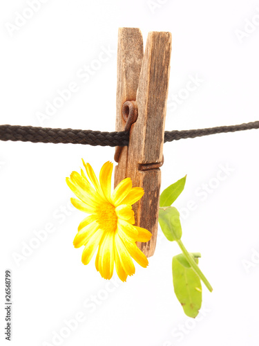 Flower and clothespin Poster