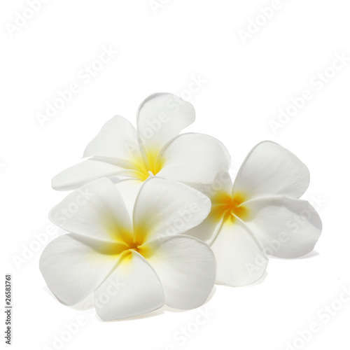 In de dag Frangipani Tropical flowers frangipani (plumeria) isolated on white