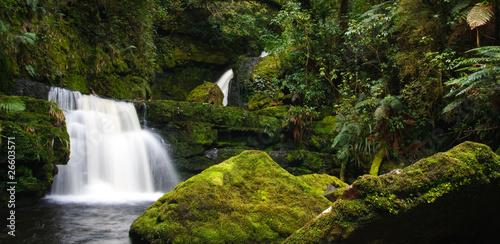 Wall Murals New Zealand Rainforest stream