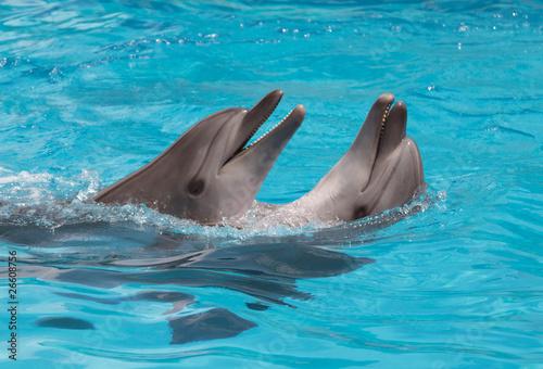 Foto op Plexiglas Dolfijnen Dolphins flirting