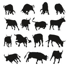 Bull Shadows
