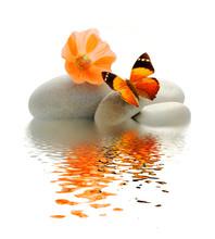 Papillon Galet
