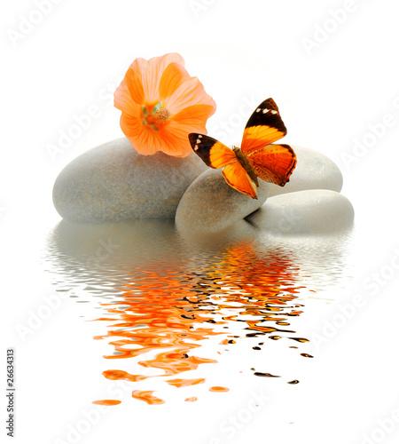 Papiers peints Papillon Papillon galet