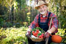 Senior Gardener With  A Basket Of Harvested Vegetables