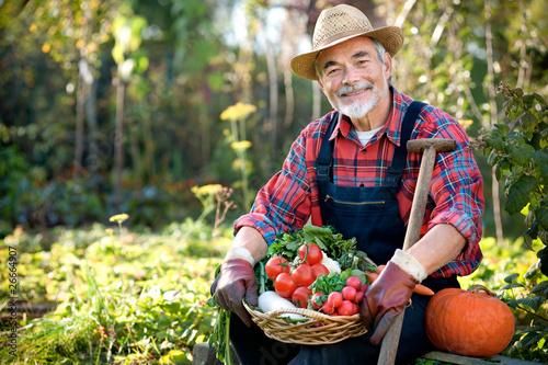 Fotografía  Senior gardener with  a basket of harvested vegetables