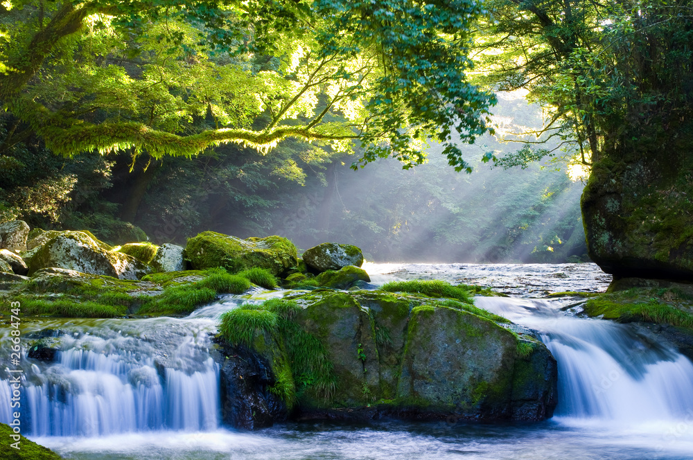 Fototapeta 原生林と渓流と光芒 Virgin forest and shaft beam of light