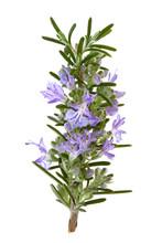 Rosemary Herb Flowers