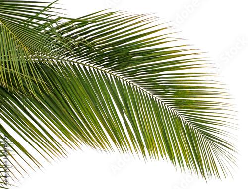 lisc-kokosa-na-bialym-tle