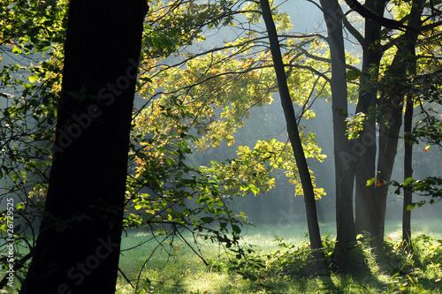 zona sile alberi 1261 © peggy