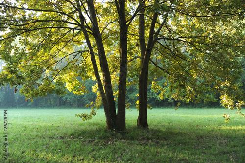 zona sile paesaggio alberi 1279 © peggy