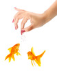 Woman feeding goldfishes