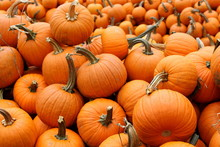 Pumpkins VII