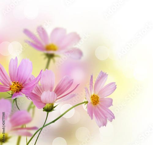 Naklejki o różnych zastosowaniach piekna-kwiecista-granica-kwiat-projekt