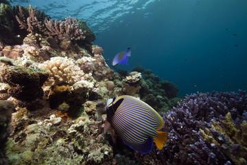 Naklejka na ściany i meble coral, fish and ocean