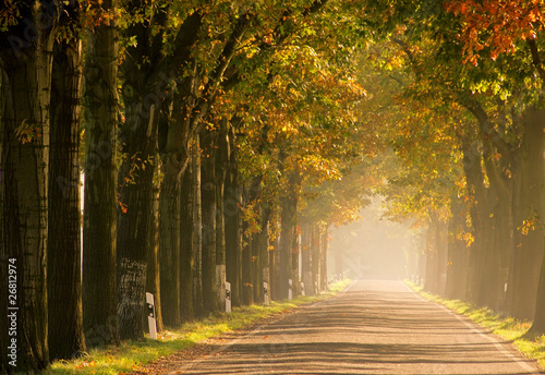 Allee im Herbst - avenue in fall 17 Wallpaper Mural