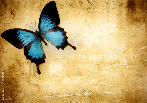 Garden Poster Butterflies in Grunge Butterfly on parchment