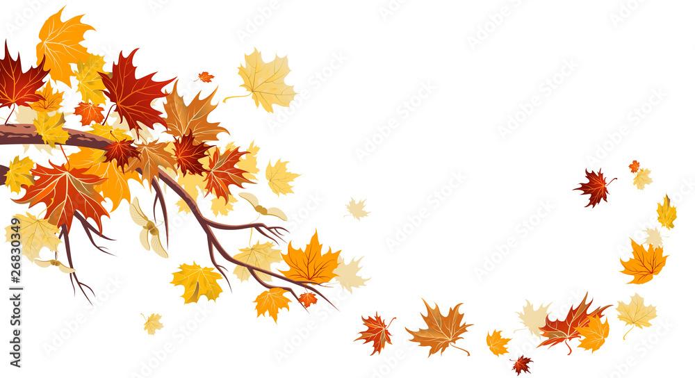 Fototapety, obrazy: Maple leaves