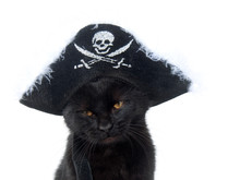 Black Cat With Pirate Hat For Halloween