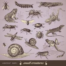 Vector Set: Small Animals