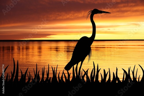 Fotografia silhouette of Big White heron staying into a grass
