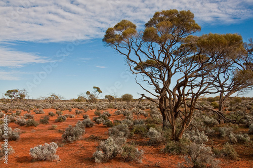 the australian landscape, south australia