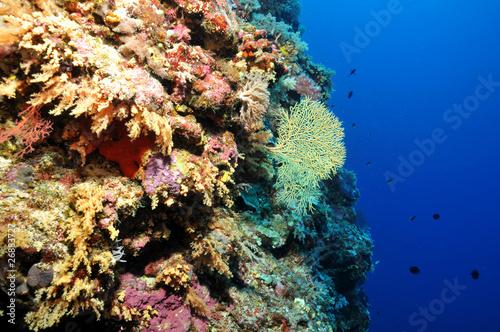 Staande foto Koraalriffen Korallenriff
