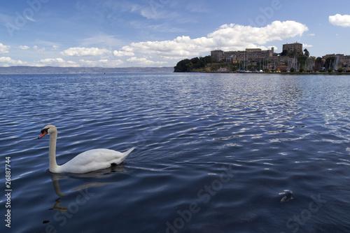 Fotografie, Obraz  Lago con cigno