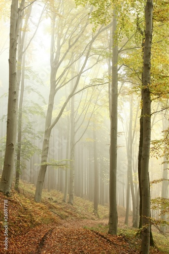Papiers peints Foret brouillard Lane in the misty autumnal forest in a nature reserve